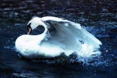 Swan, Hamburg, Nature, Swans Stock Photo