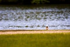 Swan Hiding on Lake Stock Photos