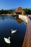 Swan i laken Arkivfoto