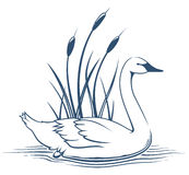 Swan Icon. Illustration of a swan swimming near cattail plants Royalty Free Stock Photo