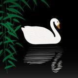 Swan illustration Royalty Free Stock Photo