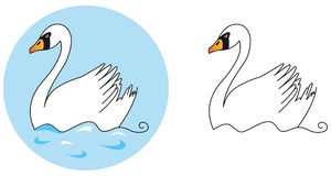 Swan. Illustration color swan and white swan Stock Images