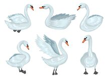 Free Swan In Different Poses. Collection Of Grey Swans. Vector Cartoon Illustration Royalty Free Stock Photo - 173438105