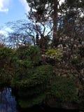 Swan at the Irish Stud National park. Irish Stud National park and gardens ,Kildare,Ireland royalty free stock photos