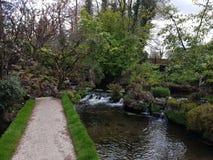 Swan at the Irish Stud National park. Irish Stud National park and gardens ,Kildare,Ireland stock photo