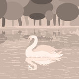 Swan on a lake Royalty Free Stock Image