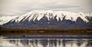 Swan Lake Royalty Free Stock Photo