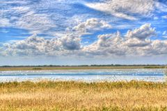 Swan-lake Royalty Free Stock Photography