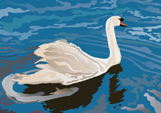 A Swan on the lake Royalty Free Stock Photography
