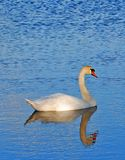 Swan. On the lake Royalty Free Stock Photo