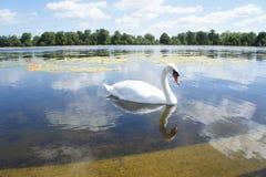 Swan lake Royaltyfri Foto