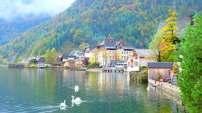 Swan lake and Autumn. Colorful autumn with beautiful view of Swan Lake, Hallstatt, Austria Royalty Free Stock Photo