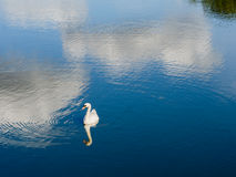 Swan on lake with exceptionally beautiful ripples, reflections. Stock Photo
