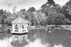 Swan Lake royalty free stock images