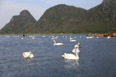 The swan lake in puzhehei county,yunnan, china. The swan  lake in puzhehei county,yunnan, china Royalty Free Stock Image