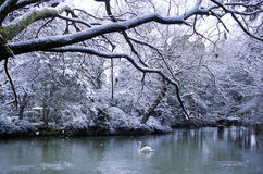 Swan Lake Season Snowing Landscape Concept Royalty Free Stock Images