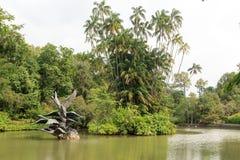 Swan lake in Singapore Botanic Gardens Royalty Free Stock Images