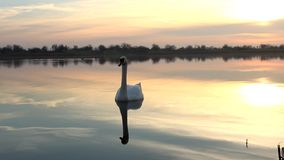 SWAN AND LAKE SUNRISE stock video footage