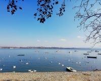 Swan lake arkivfoto