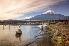 Swan at Lake Yamanaka. One of fuji five lake Stock Photos