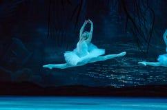 Swan Lakebalett royaltyfri fotografi