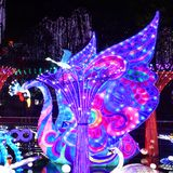 Swan Lantern in Zigong, China. Lanterns, also known as flower lanterns, is a popular traditional Chinese folk arts and crafts as New Year celebration. Zigong Royalty Free Stock Images