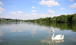 Swan on the Max-Eyth-See Royalty Free Stock Photo