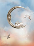 Swan in the moon royalty free stock image