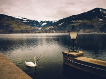 Swan On Mountain Lake Royalty Free Stock Photos