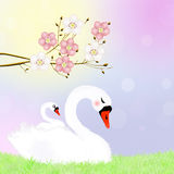 Swan in the nest Stock Photography