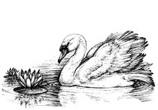 Free Swan On Lake Profile Stock Photography - 70460242