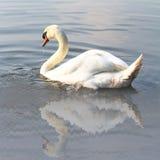 Swan på laken Royaltyfria Foton