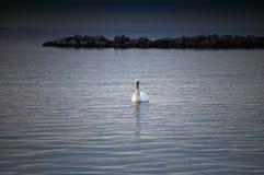 Swan på laken Fotografering för Bildbyråer