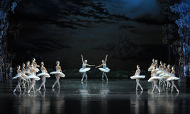 The swan in pairs rise and dance in a happy mood-ballet Swan Lake Royalty Free Stock Photo