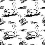 Swan pattern Stock Photography