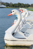 Swan Pedal boat Stock Images