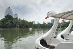 Swan Pedal boat in the pond Royalty Free Stock Photo