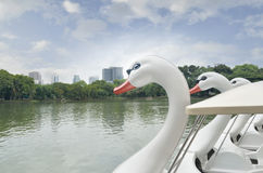Swan Pedal boat in the pond Royalty Free Stock Photography