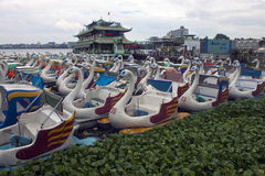 Swan pedal boats Stock Photos