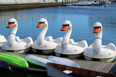 Swan Pedal Boats Stock Photography