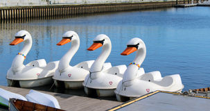 Swan Pedal Boats Stock Images