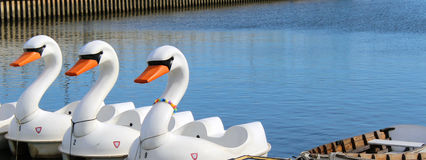 Swan Pedal Boats. Row of swan boats that you pedal docked in a lake in Philadelphia, Pennsylvania with space for copy royalty free stock photography