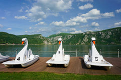 Swan pedal boats Stock Image