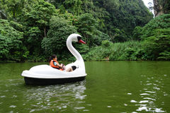 Swan Pedal in the pond of the park Stock Photos