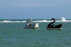 Swan pedalos. Two swan pedalos in the sea, Brazil royalty free stock photo