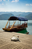 Swan on a pier on Lake Bled Royalty Free Stock Images