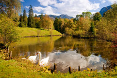 Swan pond. In autumn landscape with two swans and mountains in background. Location: Castle Linderhof gardens, Bavaria, Germany stock images