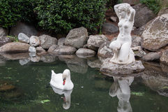 Swan in a pond with antique sculpture. In high quality Stock Images