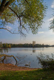 Swan on pond. Swan in the beautiful lake and landscape sunbeam Stock Photos