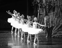 Swan queue-ballet Swan Lake Stock Photography